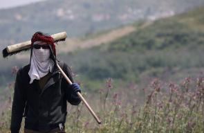 عمال فلسطينيون أثناء حرقهم لسنابل القمح لإنتاج الفريكة في بيادر بلدة عجة جنوب جنين.