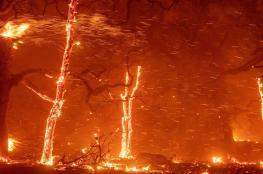 النيران تلتهم 250 شجرة زيتون  جنوب جنين