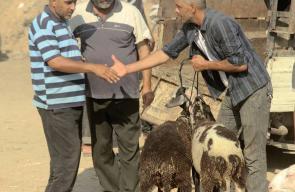 مواطنون يشترون اضاحي العيد في احد أسواق الحلال بقطاع غزة