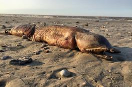 بالصور ..مخلوق ضخم ومرعب حير العلماء جلبه إعصار هارفي من البحر