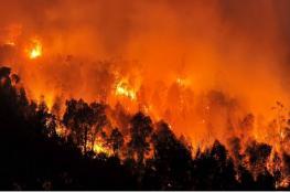 الجزائر ترفع درجة الطوارئ للقصوى لمواجهة موجة حرائق غير مسبوقة