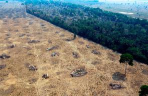 الحرائق لا تزال متواصلة في غابات الامازون