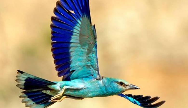 500 مليون طير تزين سماء فلسطين سنويا