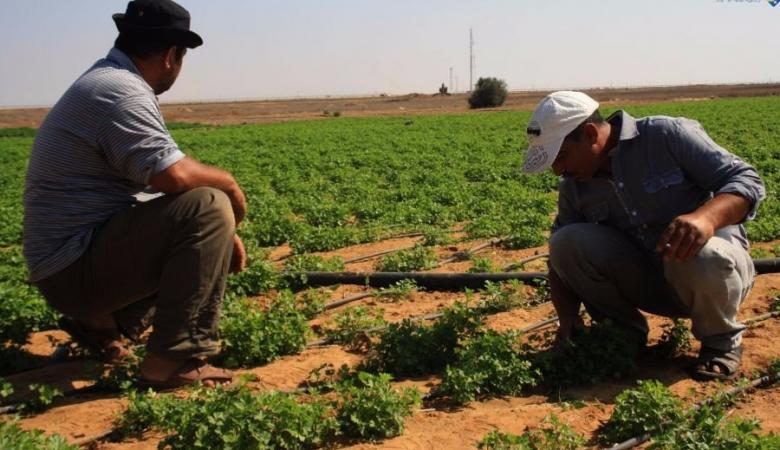 وزارة الزراعة : صرف تعويضات لـ400 مزارع متضرر خلال السنوات السابقة