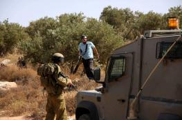 مستوطنون يسرقون ثمار الزيتون شرق نابلس