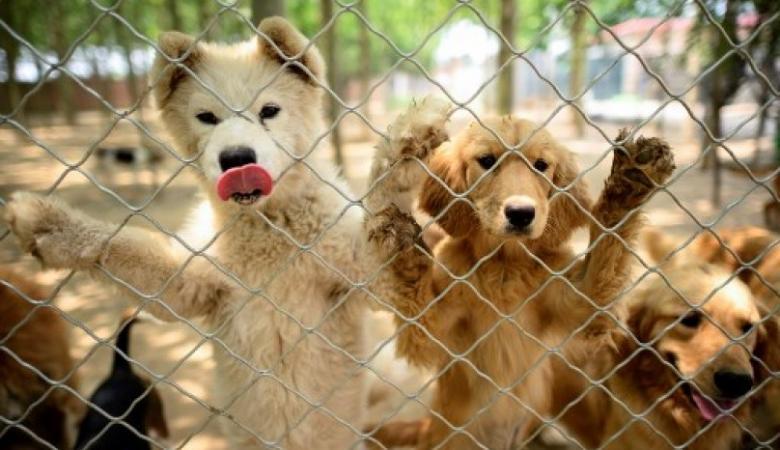 الصينيون يستعدون لالتهام 10 آلاف كلب في مهرجان كبير
