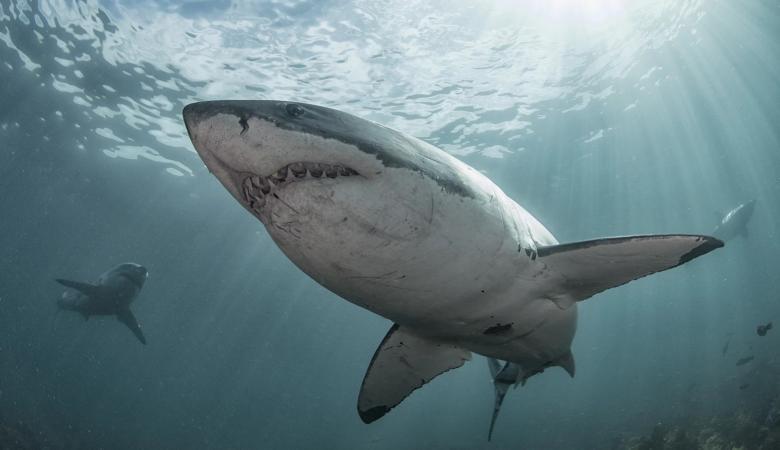 شاب يواجه الخطر ويحارب القرش لانقاذ زوجته من بين انيابه