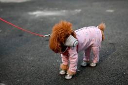 """تسجيل أول اصابة"""" لكلب """"بفيروس كورونا"""