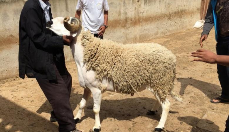 أول دولة عربية تدرس إلغاء احتفالات عيد الأضحى بسبب كورونا