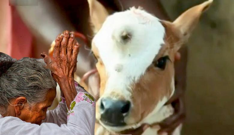 بعد مقتل شاب مسلم.. رئيس وزراء الهند يدعو لوقف قتل الناس بسبب الأبقار