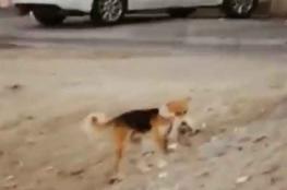 مؤثر ...الميت قط والدافن كلب.. فيديو يعلم معنى الرحمة