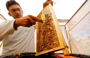 استخراج عسل الزعتر البري(القميلة) من جبل تل العاصور برام الله