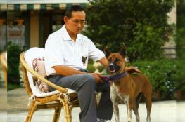 انتقاد كلبة الملك في تايلند يقودك للسجن