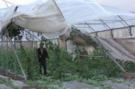 """صرف تعويضات """"مالية """" للمزارعين الذين تضرروا بفعل المنخفضات الجوية"""