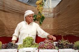 افتتاح مهرجان العنب الفلسطيني في حلحول شمال الخليل