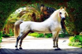 نفوق أجمل حصان في مصر ثمنه 10 مليون دولار لأسباب مؤسفة