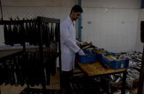 تغليف سمك الرنقة في مدينة رفح جنوب قطاع غزة استعدادا لعيد الفطر السعيد