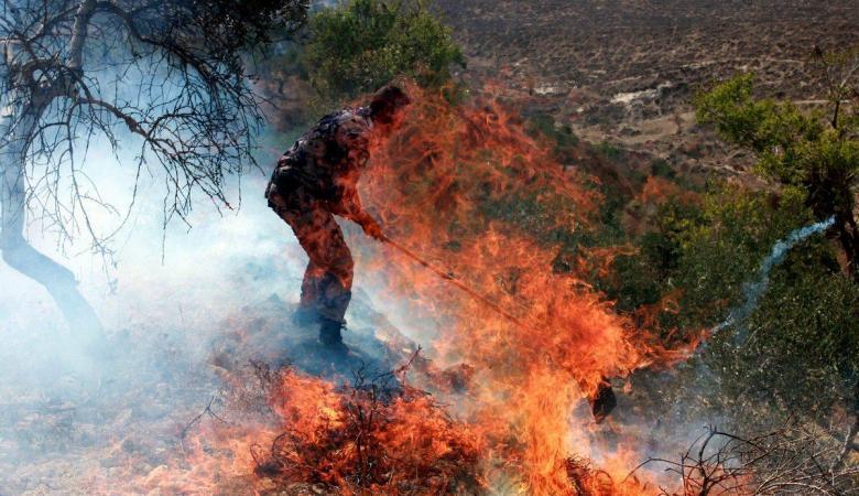 النيران تلتهم خمسين شجرة زيتون في جنين