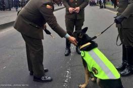 عصابة تخصص 70 ألف دولار لم يأتي برأس كلبة بوليسية