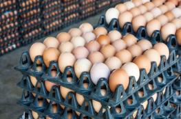 """اغلاق محل تجاري لرفعه سعر كرتونة """"البيض """""""