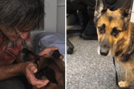 كلب ينقذ صاحبه بعد 11 ساعة من السباحة