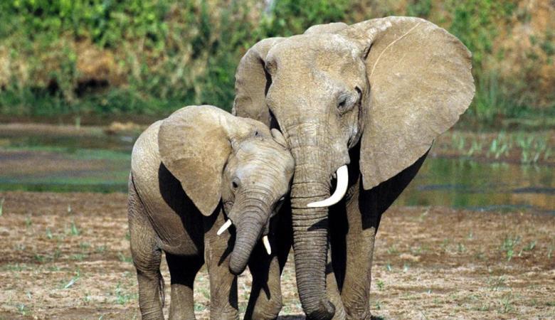 5 حيوانات مرشحة للاختفاء قريباً من على ظهر الأرض