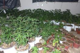 ضبط مشتلين للمخدرات في الخليل