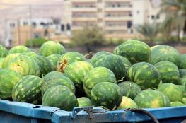 بطيخ غزة بلا طعم والزراعة تنفي وتقول: بطيخنا مميز وسليم