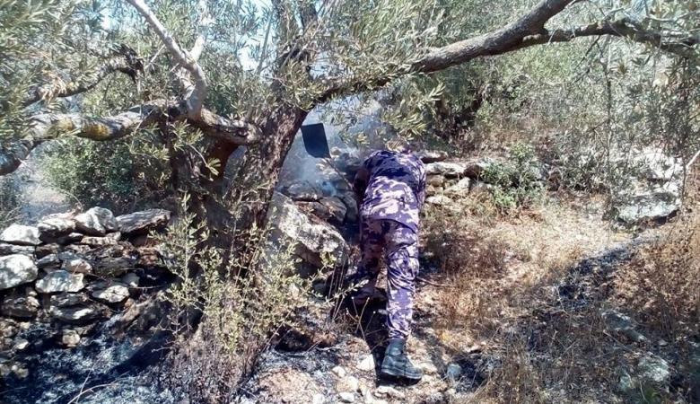 حريق يطال عشرات أشجار زيتون في قرية العرقة غرب جنين