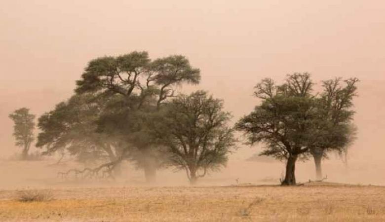 الراصد الجوي لرام الله الاخباري : الاسبوع المقبل رياح شرقية وغياب للأمطار