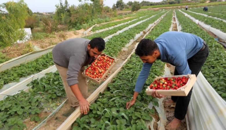 """الاقتصاد: """"إسرائيل"""" تمنع تصدير المنتجات الزراعية الفلسطينية للعالم"""
