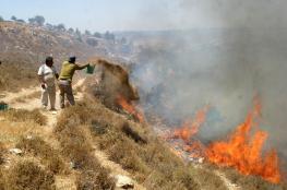 مستوطنون يضرمون النار بمساحات واسعة من أراضي برقة
