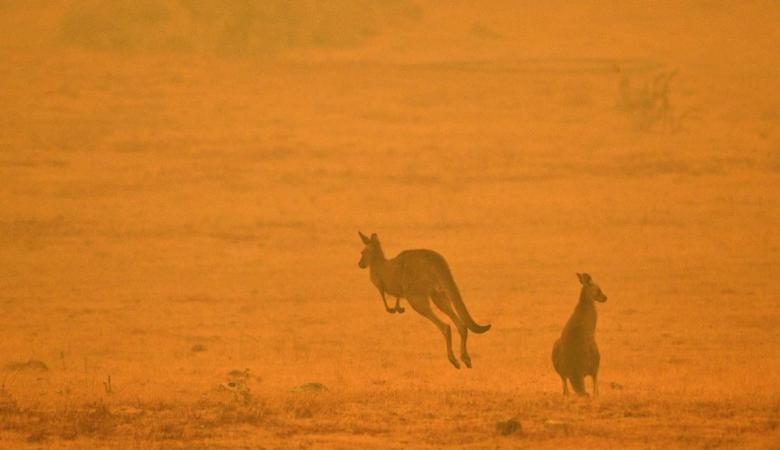 7 أشياء ينبغي عليك معرفتها عن كارثة حرائق أستراليا