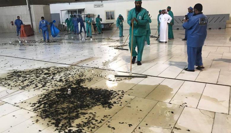 اعداد هائلة من الحشرات السوداء تغزو ساحات الحرم والسعودية توضح الحقيقة