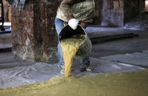 صناعة الصابون الأصلي في نابلس من زيت الزيتون البكر