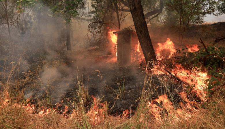 كاليفورنيا تتعرض لأضخم حرائق في تاريخها