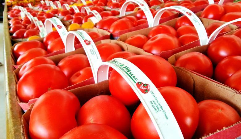 يديعوت : الطماطم التركية تغمر طعام جنود جيش الاحتلال