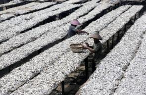 صيادون اندونيسيون يرتبون أسماك مملحة على رفوف التجفيف في جاكرتا