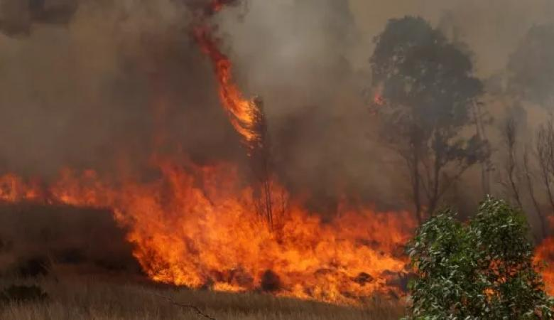 الحرائق تلتهم عشرات الدونمات في مستوطنات الغلاف بفعل البالونات الحارقة