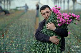 """ورود غزة لن تحضر """" الفالنتاين """" في أوروبا هذا العام"""