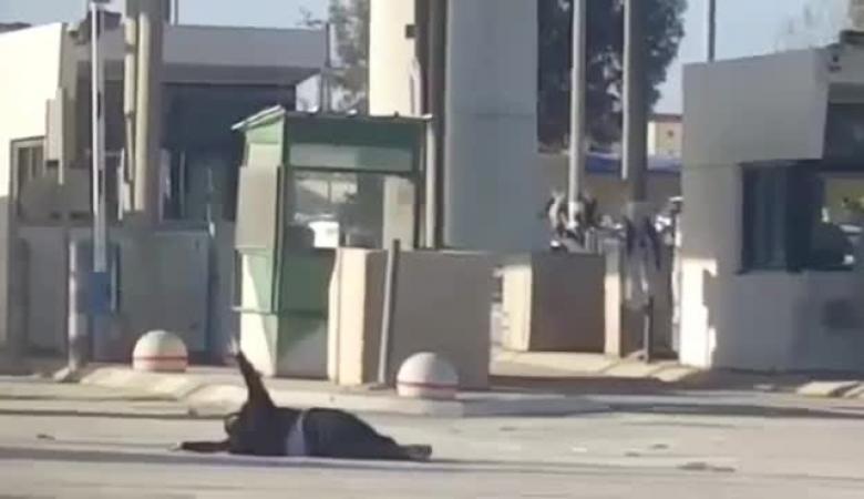 بالفيديو ..جندي اسرائيلي يترك فلسطينية تنزف لمدة ساعة ونصف