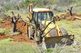 """المستوطنون يقتلعون """" 700"""" شجرة زيتون ولوزيات من اراضي شمال غرب نابلس"""