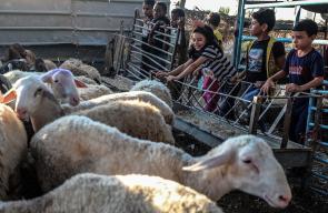 استعدادات في غزة لاستقبال عيد الأضحى المبارك بشراء المواشي