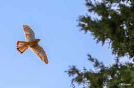 """""""التعليم البيئي"""": 373 نوع طيور في الضفة وغزة و500 مليون عابر سنويًا"""