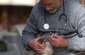 طبيب بيطري من رام الله يجعل من منزله مأوى للقطط المشردة، ويقدم لها العلاج والطعام.