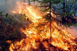 أكثر من 6000 حريق بغابات في روسيا