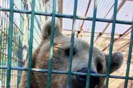 قلقيلية: إجراءات السلامة في حديقة الحيوانات مطابقة للمواصفات