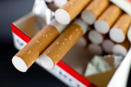 سجائر  بـ 8 شواقل قريباً في الاسواق