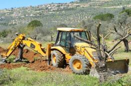 الاحتلال يقتلع ويجرف عشرات الدونمات وأشجار الزيتون في كفرقدوم