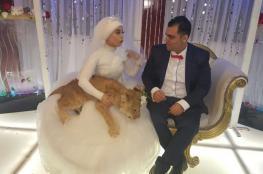 عروس مصرية تصر على حضور أسد ليلة زفافها